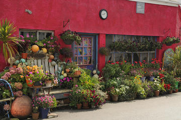 Blumenfreunde in Lizard, Cornwall