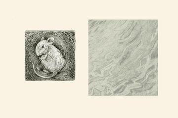 Maus, Aquatinta, rechts Detail
